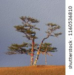 lonely shamanic pine with... | Shutterstock . vector #1160536810