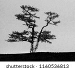 lonely shamanic pine with... | Shutterstock . vector #1160536813