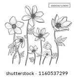 decorative anemone flowers ... | Shutterstock .eps vector #1160537299