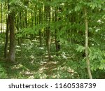 beautiful green forest | Shutterstock . vector #1160538739