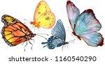 exotic butterflies wild insect... | Shutterstock . vector #1160540290