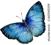 Stock photo exotic butterflies wild insect in a watercolor style isolated full name of the insect butterflies 1160540359