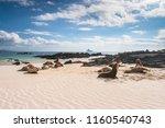 ecuador. the galapagos islands. ... | Shutterstock . vector #1160540743