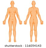 Female Body Shapes Human Outline
