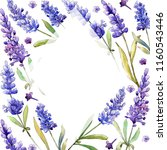 watercolor purple lavender... | Shutterstock . vector #1160543446
