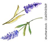 watercolor purple lavender... | Shutterstock . vector #1160543569