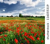 A Poppy Field And A Country...
