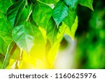 closeup nature view of green... | Shutterstock . vector #1160625976