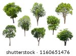 collection of isolated trees on ... | Shutterstock . vector #1160651476
