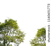 collection of isolated trees on ... | Shutterstock . vector #1160651773
