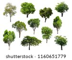 collection of isolated trees on ... | Shutterstock . vector #1160651779