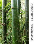 Bamboo Covered In Names And...