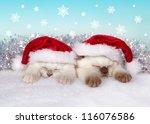 Little Cats Wearing Santa's Hat ...