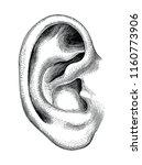 human ear hand draw vintage...   Shutterstock .eps vector #1160773906