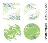 vector eucalyptus hand drawn... | Shutterstock .eps vector #1160779420