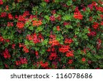 Colorful Floral Background From ...
