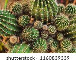 closeup view of green cacti as... | Shutterstock . vector #1160839339