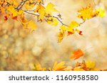 autumn leaves background | Shutterstock . vector #1160958580