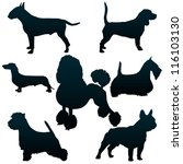 Stock vector vector silhouettes of dogs for your design 116103130