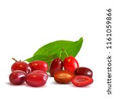 fresh  nutritious and tasty...   Shutterstock .eps vector #1161059866