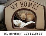 Small photo of Funny mini beige chichuahua sleeping in her dog house with text my home