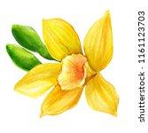 beautiful vanilla flower on... | Shutterstock . vector #1161123703