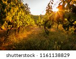 vineyards at sunrise on a... | Shutterstock . vector #1161138829