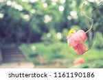 flowers used for decorating the ... | Shutterstock . vector #1161190186