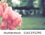 flowers used for decorating the ... | Shutterstock . vector #1161191290