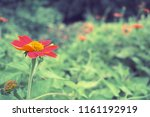 flowers used for decorating the ... | Shutterstock . vector #1161192919