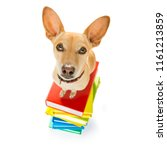 chihuahua dog on  a tall stack... | Shutterstock . vector #1161213859