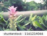 flowers used for decorating the ... | Shutterstock . vector #1161214066