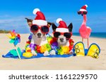 dog and owner sitting close... | Shutterstock . vector #1161229570