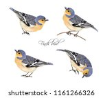 vector realistic highly... | Shutterstock .eps vector #1161266326