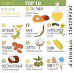 top 10 plants for vegetable oil ... | Shutterstock .eps vector #1161299350