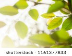 closeup green leaves and the... | Shutterstock . vector #1161377833