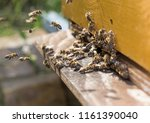 swarm of bees at beehive... | Shutterstock . vector #1161390040