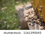swarm of bees at beehive... | Shutterstock . vector #1161390043