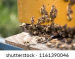 swarm of bees at beehive... | Shutterstock . vector #1161390046