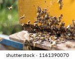swarm of bees at beehive... | Shutterstock . vector #1161390070