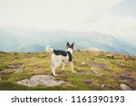 dog at the top of the mountain | Shutterstock . vector #1161390193