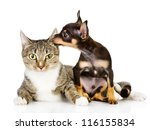 dog and cat together. the puppy ... | Shutterstock . vector #116155834
