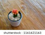 beautiful cactus decorate on... | Shutterstock . vector #1161621163