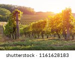 vineyard with ripe grapes in... | Shutterstock . vector #1161628183