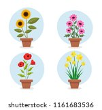 Spring Flowers In Pots ...