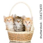 Stock photo three small kittens in a basket isolated on white background 116171653
