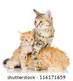 The Cat Preserves The Kittens....
