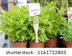 several pots of spearmint ... | Shutterstock . vector #1161722803