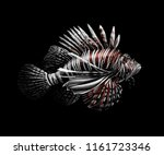 tropical fish. portrait of a... | Shutterstock .eps vector #1161723346