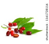 fresh  nutritious and tasty...   Shutterstock .eps vector #1161728116